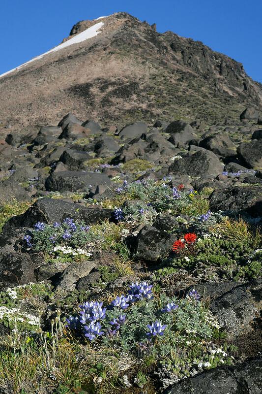 alpine wildflowers & Barrett Spur [below Barrett Spur, Mt. Hood Wilderness, Oregon]