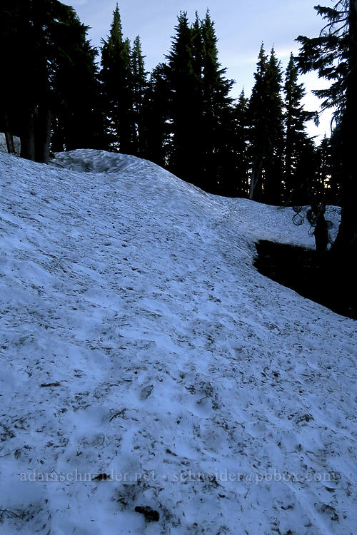 snow-covered trail [Timberline Trail, Mt. Hood Wilderness, Oregon]