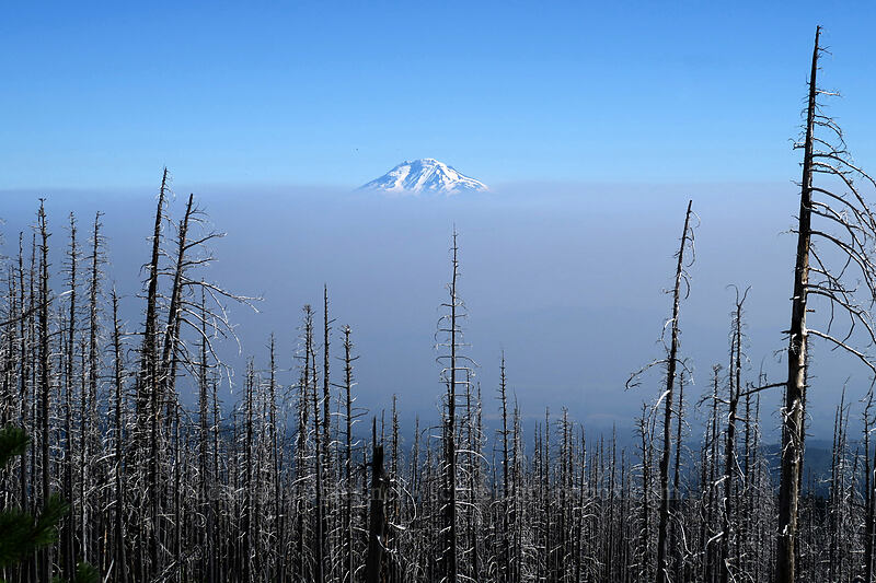 Mt. Adams & Canadian smoke [Cloud Cap Road, Mt. Hood National Forest, Oregon]