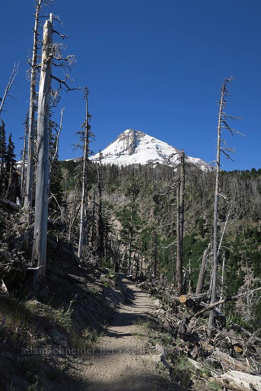 Mt. Hood [Timberline Trail, Mt. Hood National Forest, Oregon]