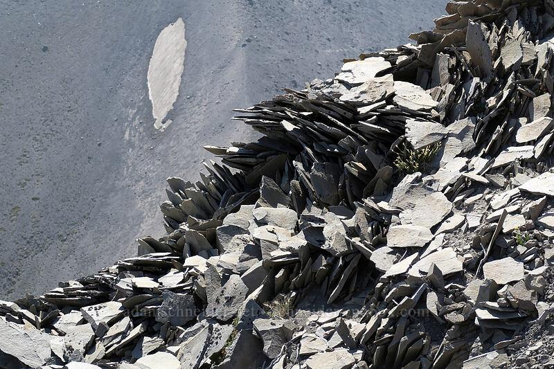 folded and broken rock [Gnarl Ridge, Mt. Hood Wilderness, Oregon]