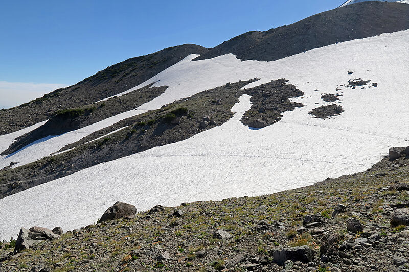 snowfields [Timberline Trail, Mt. Hood Wilderness, Oregon]