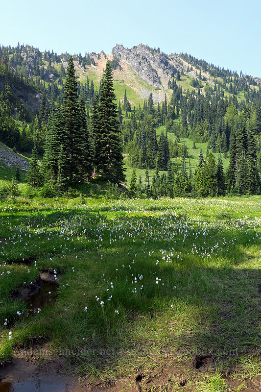 cotton-grass & Chinook Peak (Eriophorum angustifolium) [Sheep Lake, Wenatchee National Forest, Washington]