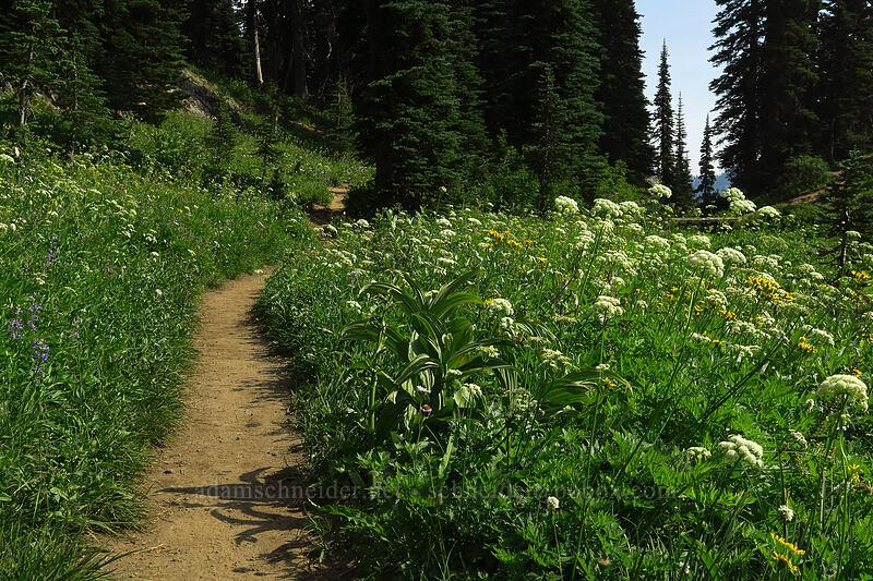 wildflowers [Sheep Lake, Wenatchee National Forest, Washington]