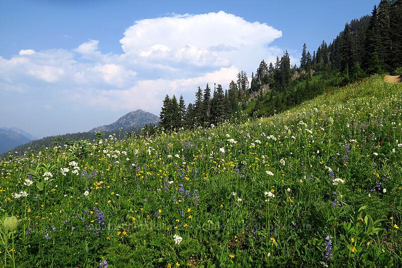 wildflowers [Naches Loop Trail, Wenatchee National Forest, Washington]
