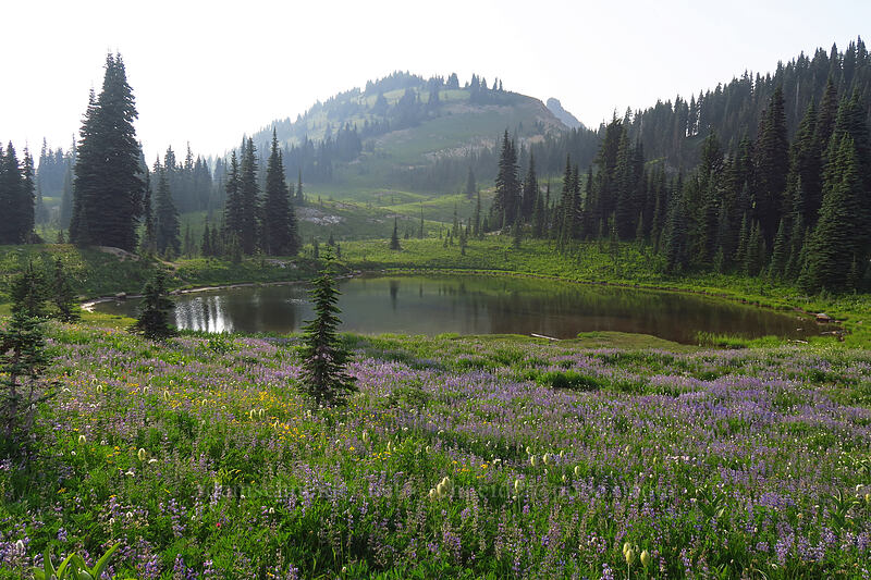 pond & Naches Peak [Naches Loop Trail, Mount Rainier National Park, Washington]