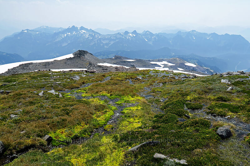 alpine meadow & the Tatoosh Range [above Paradise, Mount Rainier National Park, Washington]