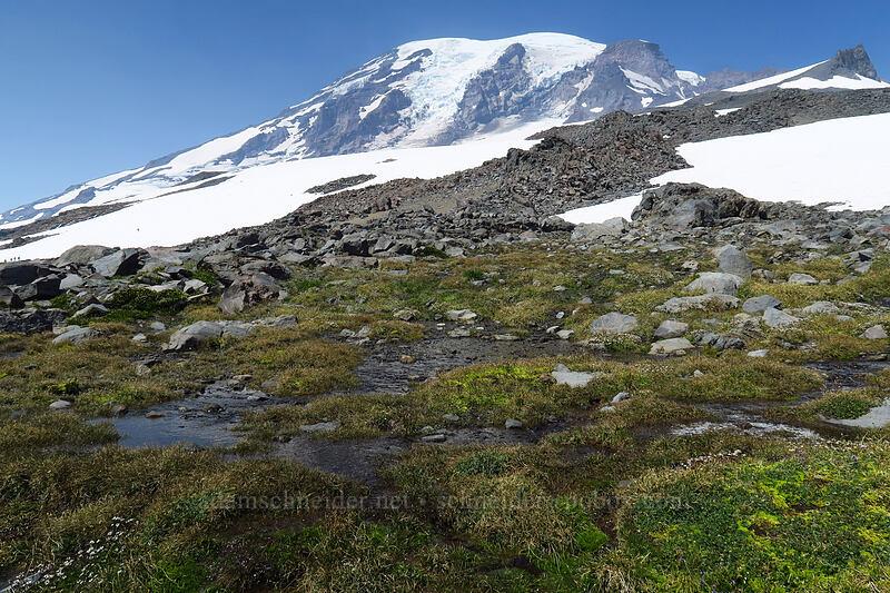 alpine springs [above Paradise, Mount Rainier National Park, Washington]