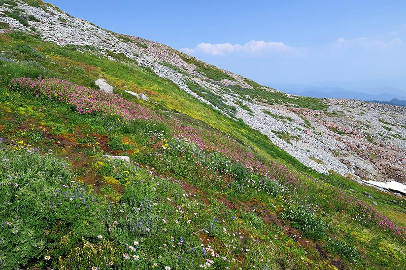 wildflowers [Skyline Trail, Mount Rainier National Park, Washington]