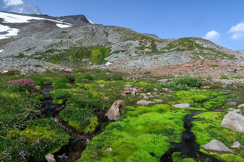 subalpine springs & widlflowers [Skyline Trail, Mount Rainier National Park, Washington]