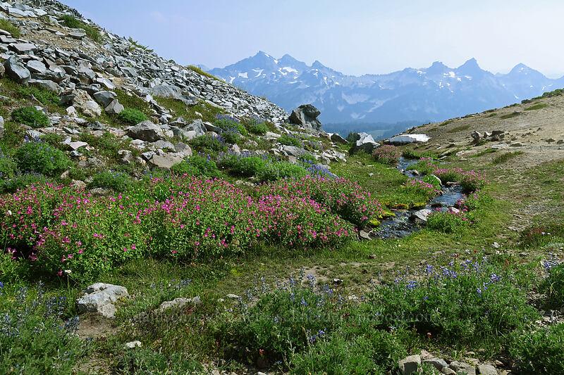 wildflowers & the Tatoosh Range [Skyline Trail, Mount Rainier National Park, Washington]