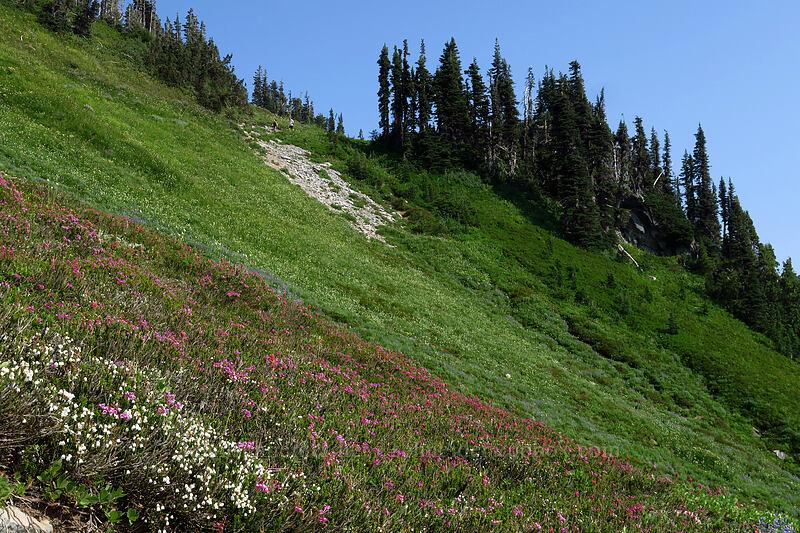 wildflowers [Golden Gate Trail, Mount Rainier National Park, Washington]