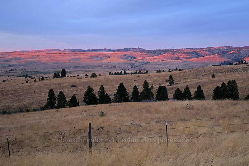 sunset on dry hills [Long Creek Mountain, Malheur National Forest, Oregon]