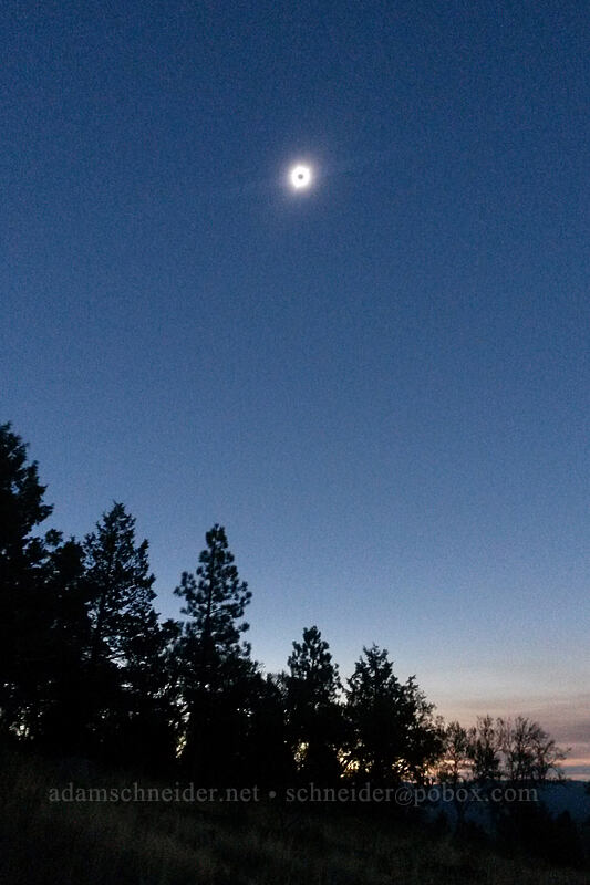 total solar eclipse [Long Creek Mountain, Malheur National Forest, Oregon]