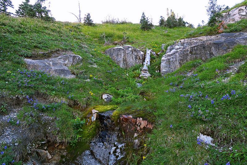 wildflowers [Boundary Trail, Mt. St. Helens National Volcanic Monument, Washington]