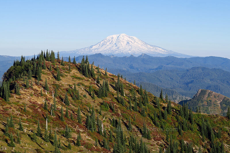 Mount Adams & Bear Pass [Boundary Trail, Mt. St. Helens National Volcanic Monument, Washington]