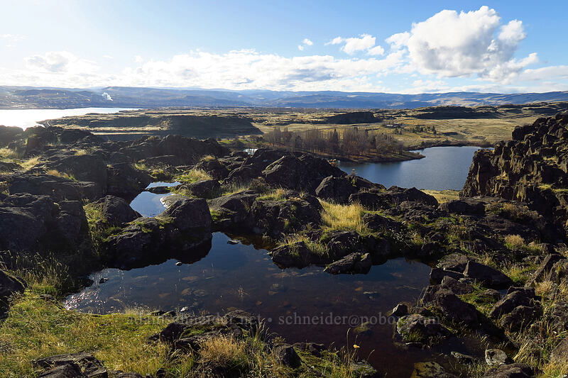 seasonal ponds/puddles [Horsethief Butte, Columbia Hills State Park, Washington]