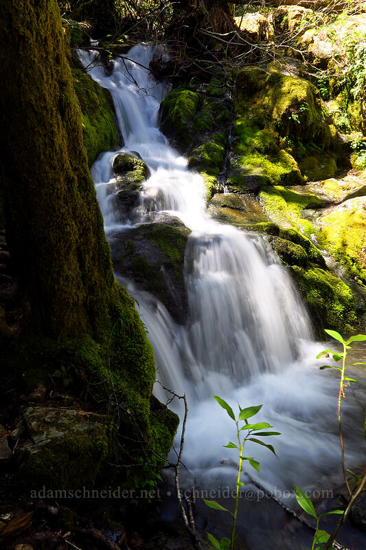 Limpy Creek [Limpy Botanical Trail, Rogue River-Siskiyou National Forest, Oregon]
