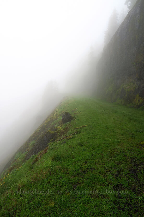 trail into the clouds [Arch Cape Mill Road, Clatsop County, Oregon]