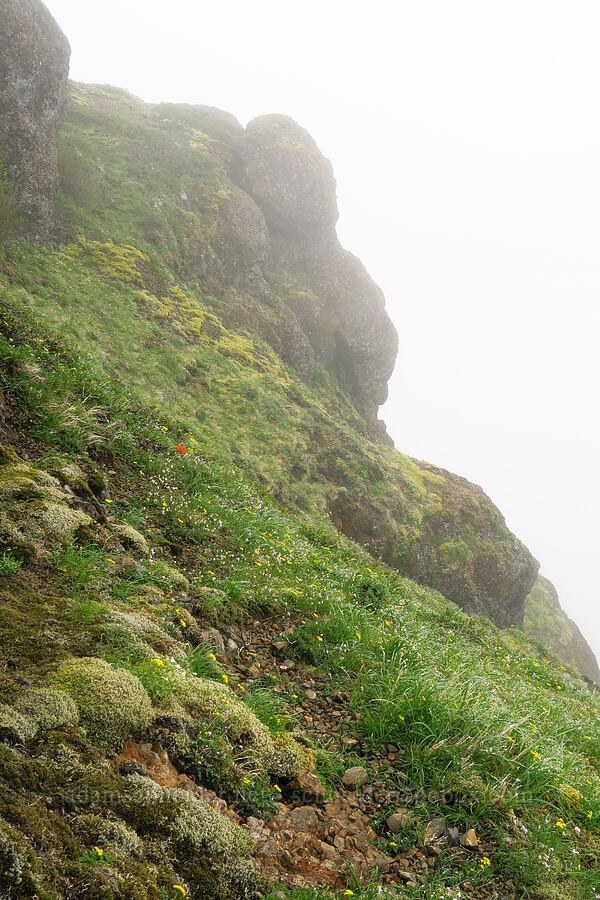 wildflowers & mist [Angora Peak summit, Clatsop County, Oregon]
