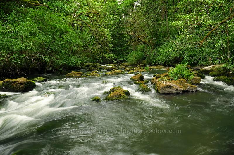 Lacamas Creek [Lacamas Park, Camas, Washington]
