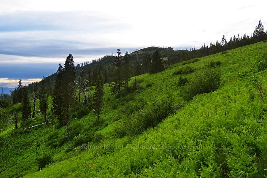 Bunchgrass Ridge [Bunchgrass Ridge, Willamette National Forest, Oregon]
