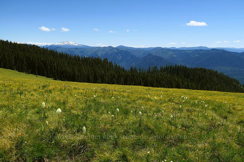 Spring Prairie & Diamond Peak [Spring Prairie, Willamette National Forest, Oregon]