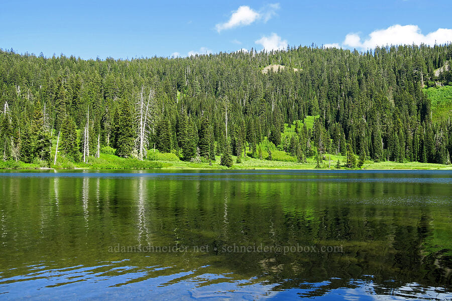 Blair Lake [Blair Lake Campground, Willamette National Forest, Oregon]