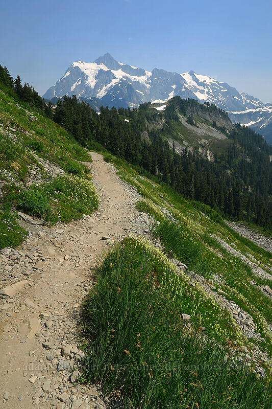 Mt. Shuksan [Chain Lakes Trail, Mount Baker-Snoqualmie National Forest, Washington]