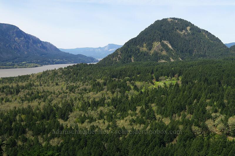 Wind Mountain [Augspurger Trail, Columbia River Gorge, Washington]