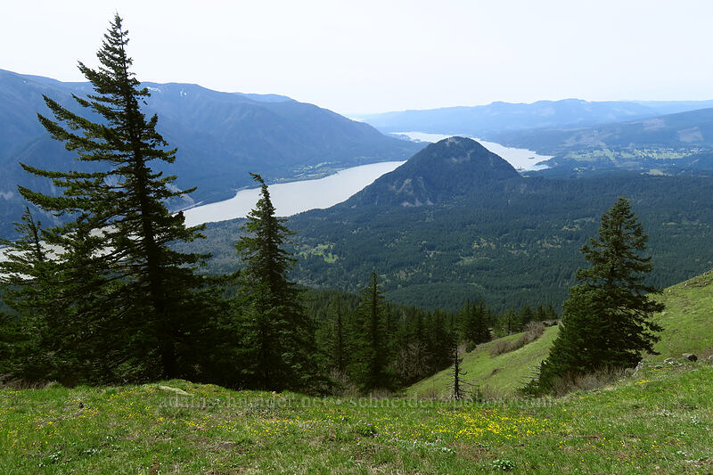 Wind Mountain & the Columbia River [Dog-Augspurger Tie Trail, Columbia River Gorge, Washington]
