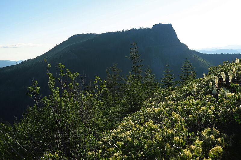 Coffin Mountain, snowbrush, & beargrass (Ceanothus velutinus, Xerophyllum tenax) [Bachelor Mountain Trail, Willamette National Forest, Oregon]