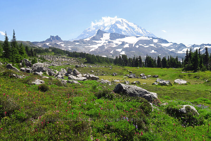 Mt. Rainier & subalpine meadows [Spray Park Trail, Mount Rainier National Park, Washington]