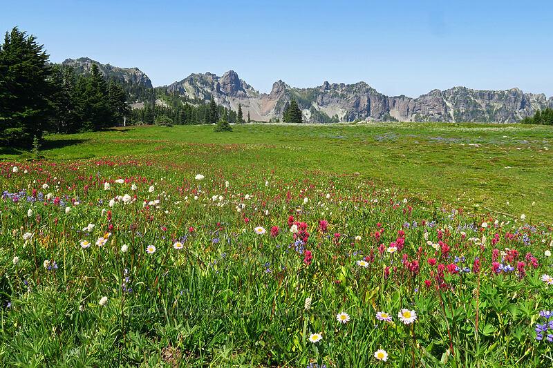 wildflowers & Mother Mountain (Castilleja parviflora var. oreopola, Erigeron glacialis var. glacialis, Lupinus latifolius, Bistorta bistortoides (Polygonum bistortoides)) [Spray Park Trail, Mount Rainier National Park, Washington]