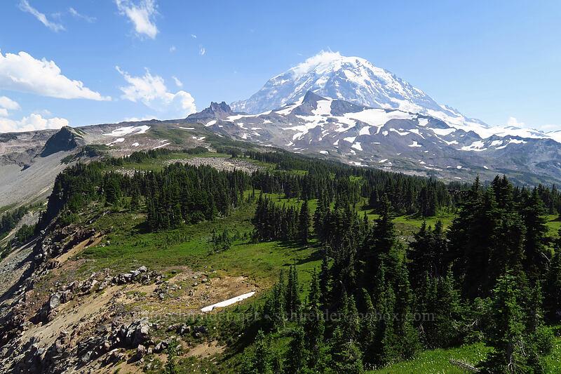 Mount Rainier [Knapsack Pass Trail, Mount Rainier National Park, Washington]