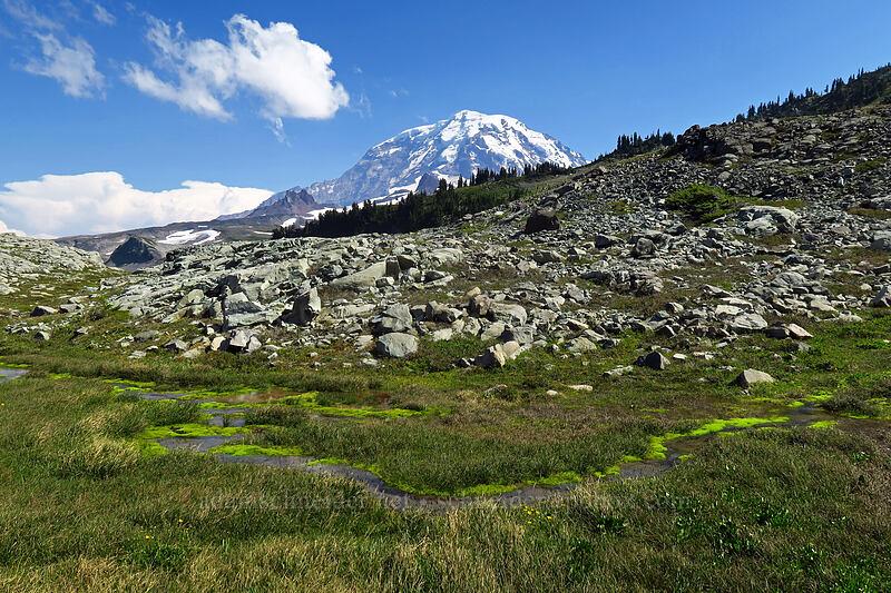 Mount Rainier & fell fields [Knapsack Pass Trail, Mount Rainier National Park, Washington]