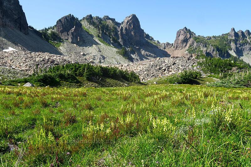coiled-beak lousewort & Mother Mountain (Pedicularis contorta) [Knapsack Pass Trail, Mount Rainier National Park, Washington]