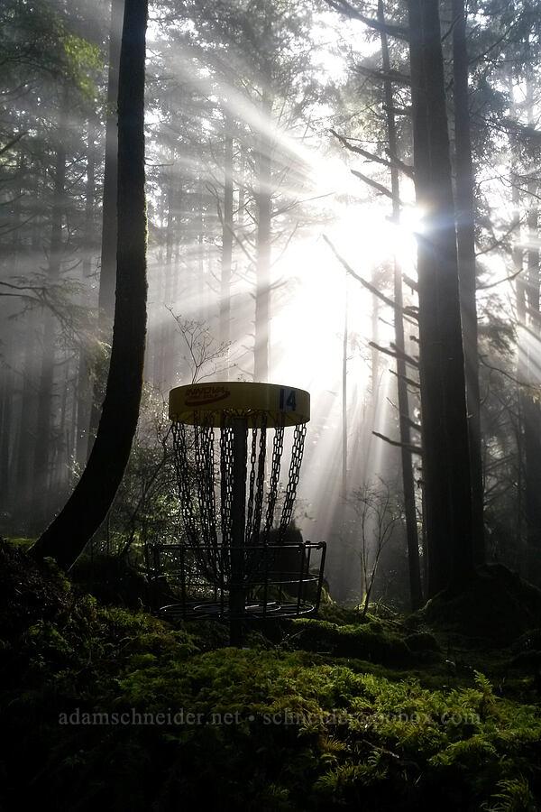disc golf, sun, & fog [Wilder Disc Golf Course, Newport, Oregon]