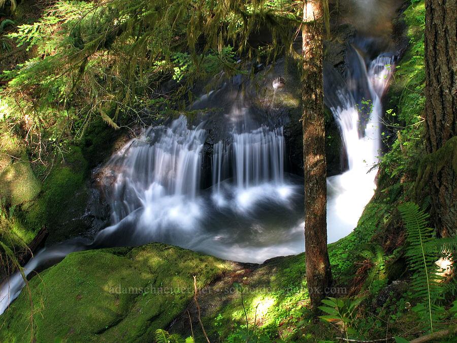Duncan Creek [Duncan Creek Trail, Skamania County, Washington]